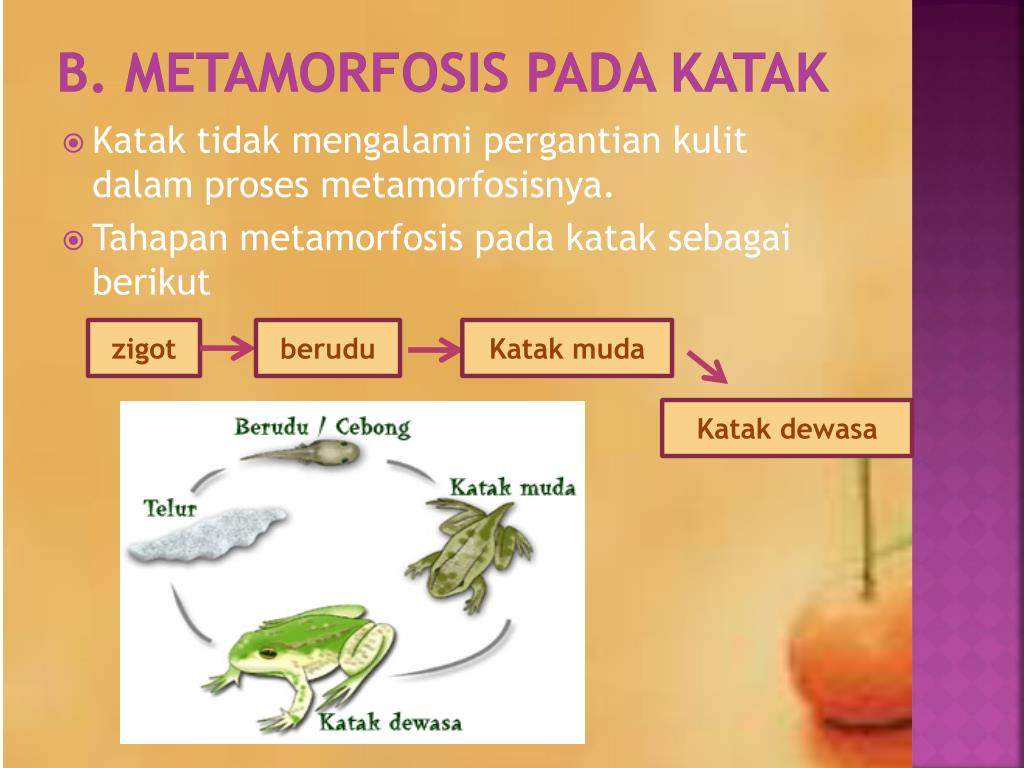 PPT - metamorfosis PowerPoint Presentation, free download ...