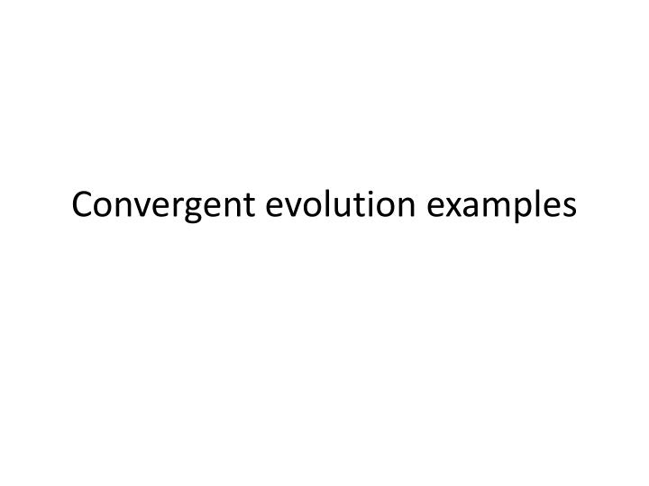convergent evolution examples n.