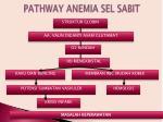 pathway anemia sel sabit