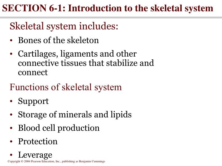 section 6 1 introduction to the skeletal system n.