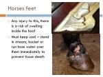 horses feet
