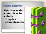 tecido epitelial13