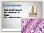 tecido epitelial15