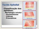 tecido epitelial3