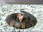 cottonmouths by m ichael