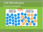 cell membrane passive transport6