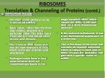 ribosomes translation channeling of proteins contd