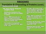 ribosomes translation channeling of proteins contd4