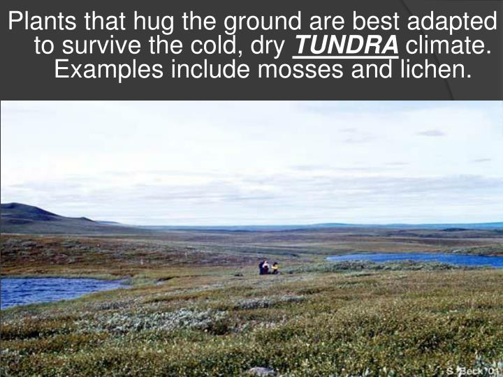 Plants that hug the ground are best adapted to survive the cold, dry