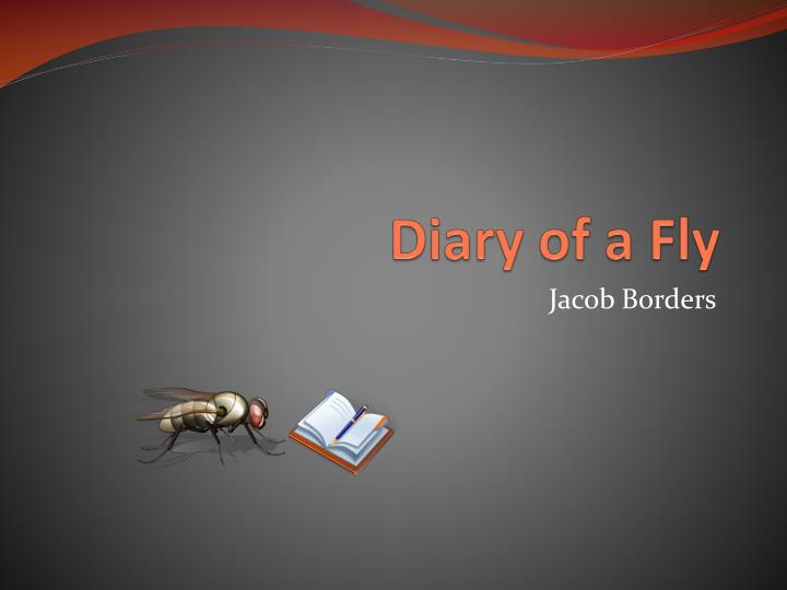 diary of a fly n.