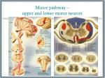 motor pathway upper and lower motor neuron