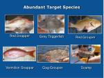 abundant target species