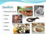 shellfish1