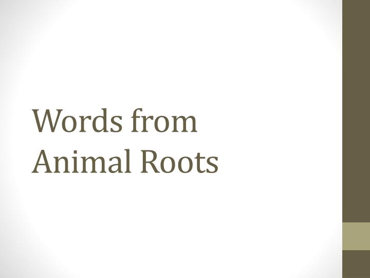 words from animal roots n.