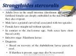strongyloides stercoralis1