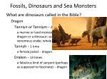 fossils dinosaurs and sea monsters11