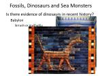 fossils dinosaurs and sea monsters18