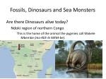 fossils dinosaurs and sea monsters28