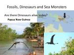 fossils dinosaurs and sea monsters34