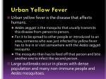 urban yellow fever
