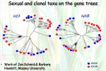 sexual and clonal taxa on the gene trees