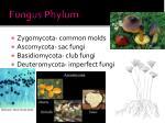 fungus phylum