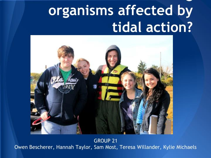 how are fouling organisms affected by tidal action n.