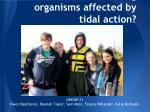 how are fouling organisms affected by tidal action