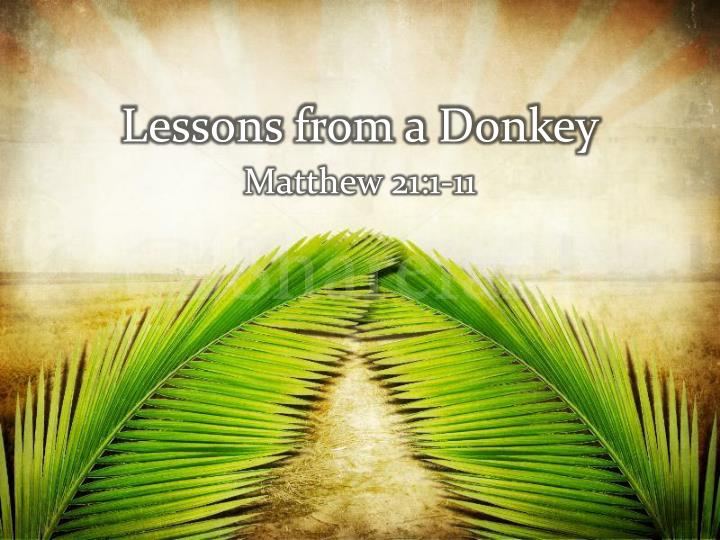 lessons from a donkey n.