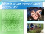 what is a salt marsh what did you do