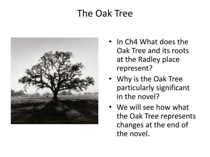 oak tree meaning symbolism