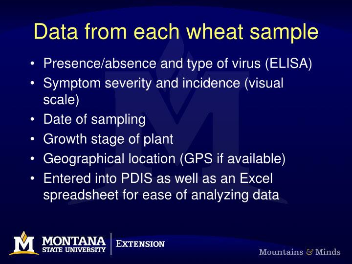 Data from each wheat sample
