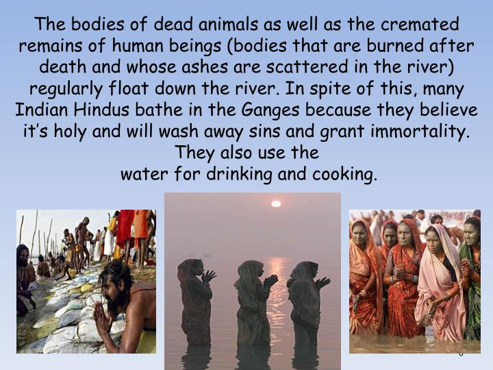 The bodies of dead animals as well as the cremated remains of human beings (bodies that are burned after death and whose ashes are scattered in the river)