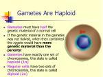 gametes are haploid