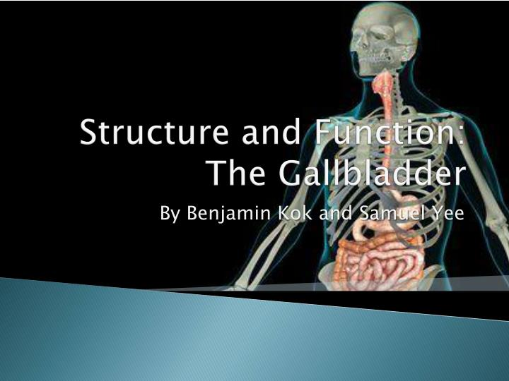 structure and function the gallbladder n.