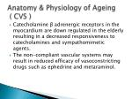 anatomy physiology of ageing cvs2