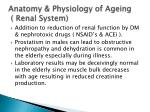 anatomy physiology of ageing renal system1