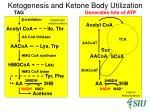 ketogenesis and ketone body utilization