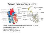tkanka przewodz ca serca