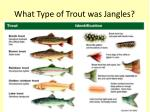 what type of trout was jangles