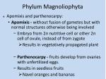 phylum magnoliophyta10