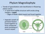 phylum magnoliophyta12