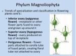 phylum magnoliophyta13