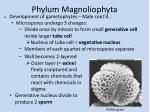phylum magnoliophyta3