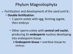phylum magnoliophyta7