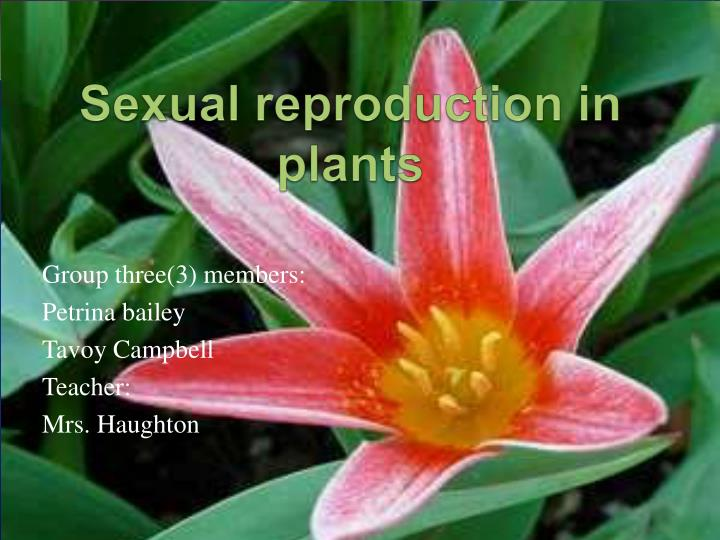 sexual reproduction in plants n.