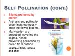 self pollination cont