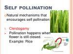 self pollination1