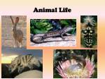 animal life1
