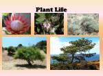 plant life1
